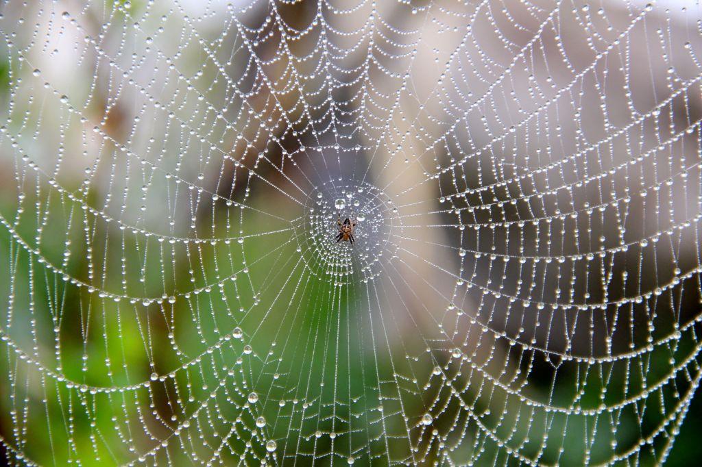 Spindeln i nätet2
