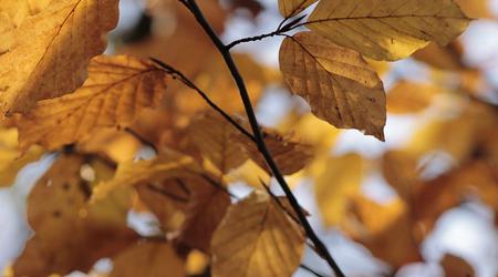 autumn-101060_640